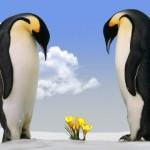 pinguine-1024x429
